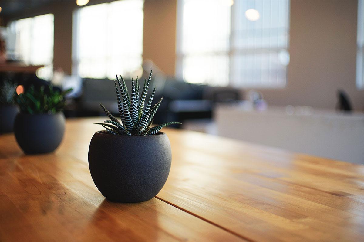 pflanze-auf-buerotisch